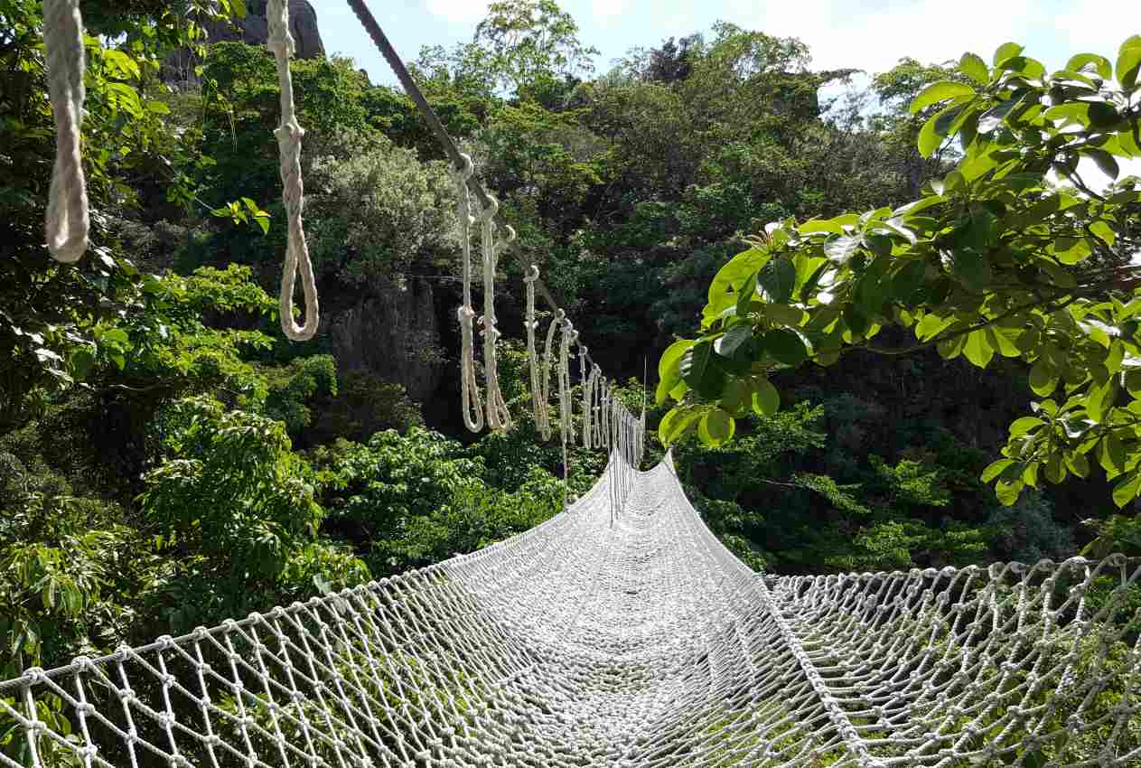 safety net under ropes course in the trees